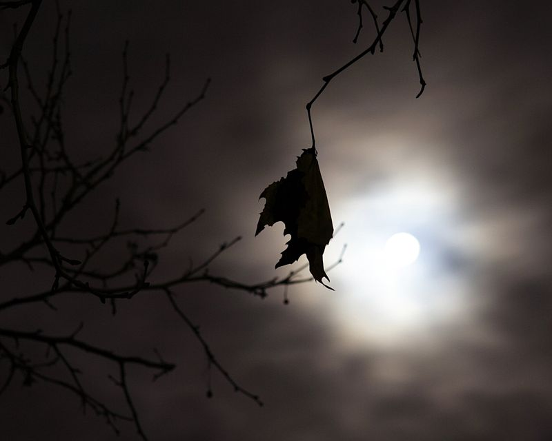 800px-Another_Full_Moon